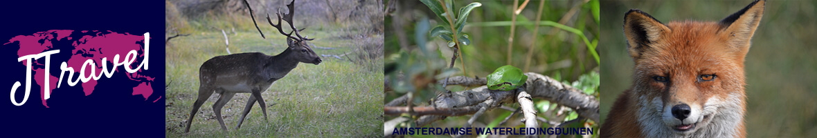 Header Amsterdamse Waterleidingduinen / Copyright © JTravel.nl
